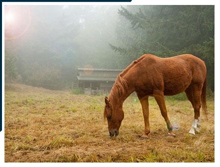 Horse Scene on Lummi Island.   Bed and Breakfast on Lummi Island, Washington