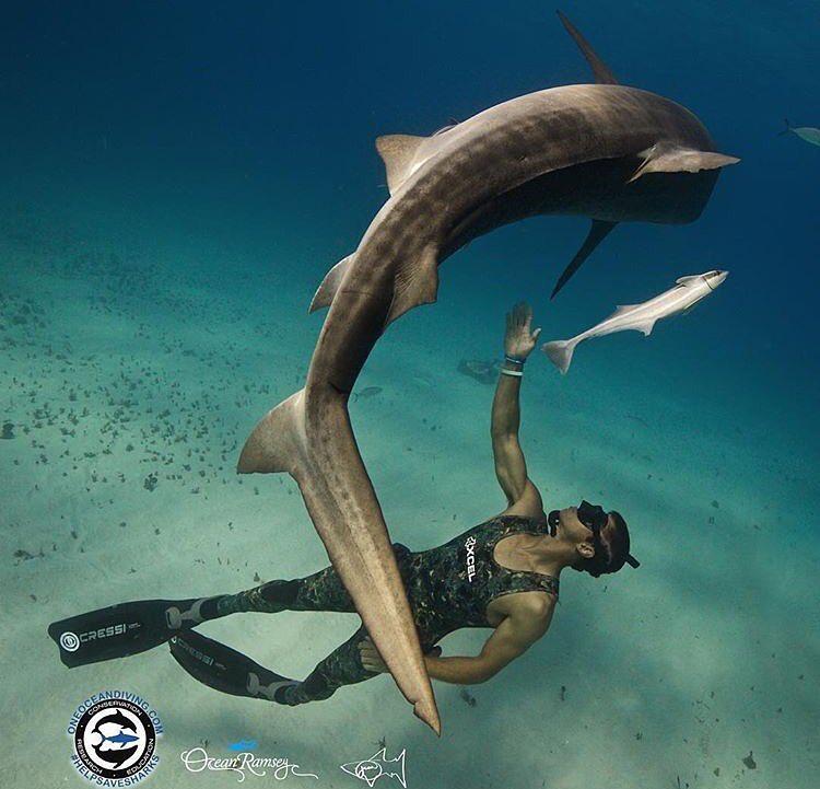 juan+shark.jpg