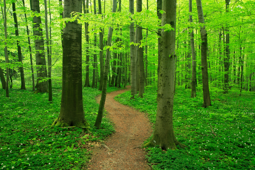 path in forest.jpg