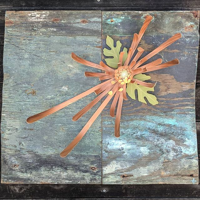 "Chrysanthemum sculpture just put up for show this Saturday 1/12 @sacredrootsholistichealing  The show features @catarinaferraz great work. Come check it out.  Chrysanthemum is 24"" x 28"". Reclaimed background wood was sunken for decades and salvaged giving its patina. Flower made of Redgum wood; steamed, bent, and dried into place."