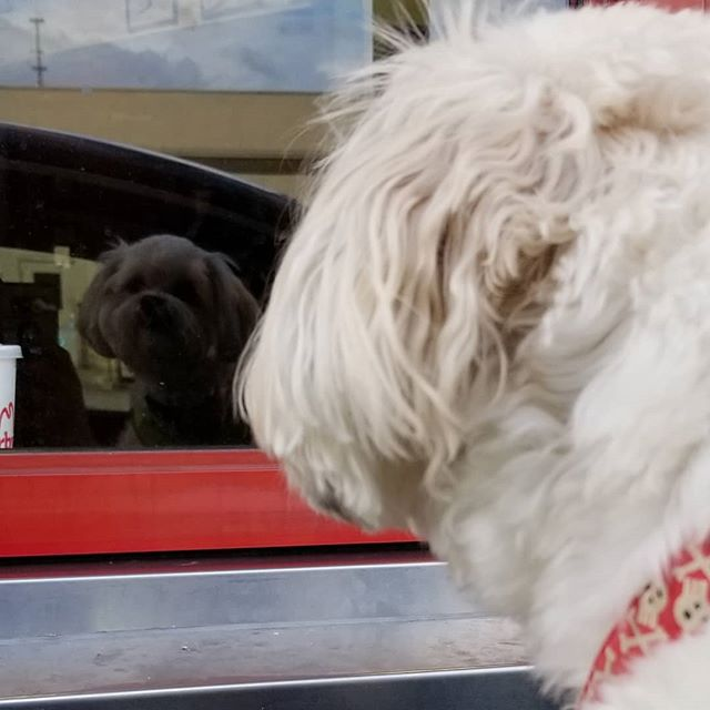 Even at the #drivethru ... he's #majestic  #pupperman #gentleman #doggo #pupper #likeaboss #dog #dogsofinstagram