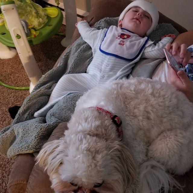 #baby #babyoverdorff #newborn #thankful #blessed #boy #babyboy #blue #bossman #offspring #beautiful #macthepupperman #doggo #dogsofinstagram #gerberphotosearch2018