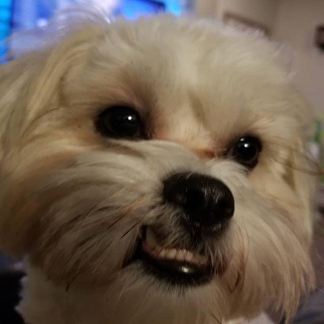 So #majestic  #pupperman #gentleman #doggo #pupper #likeaboss #dog #dogsofinstagram