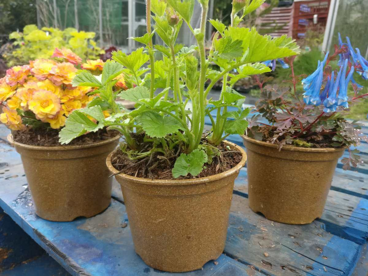Plants in biodegradable Vipots at Mapperton April 14th