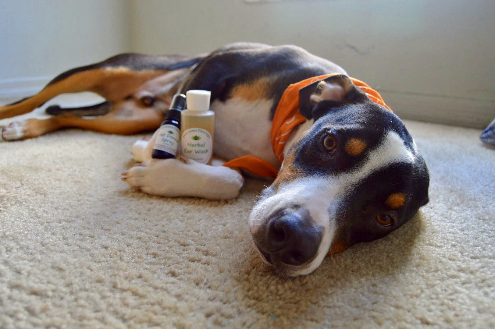 PawromaTherapy Products for Dogs