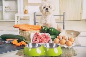 homecookingdog.jpg