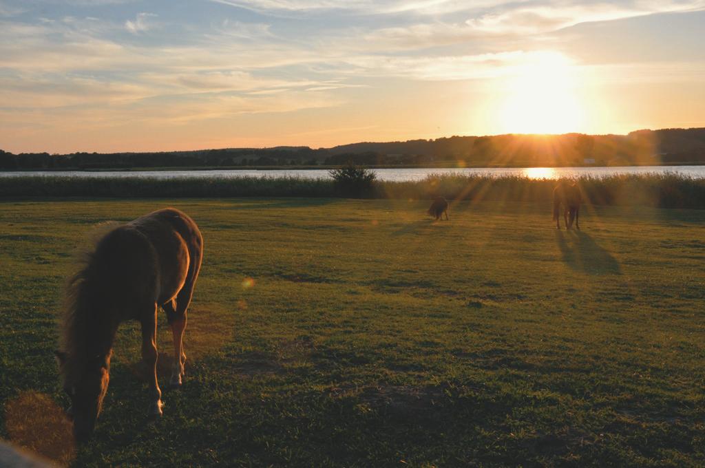 Seeblick-Pferde.jpg
