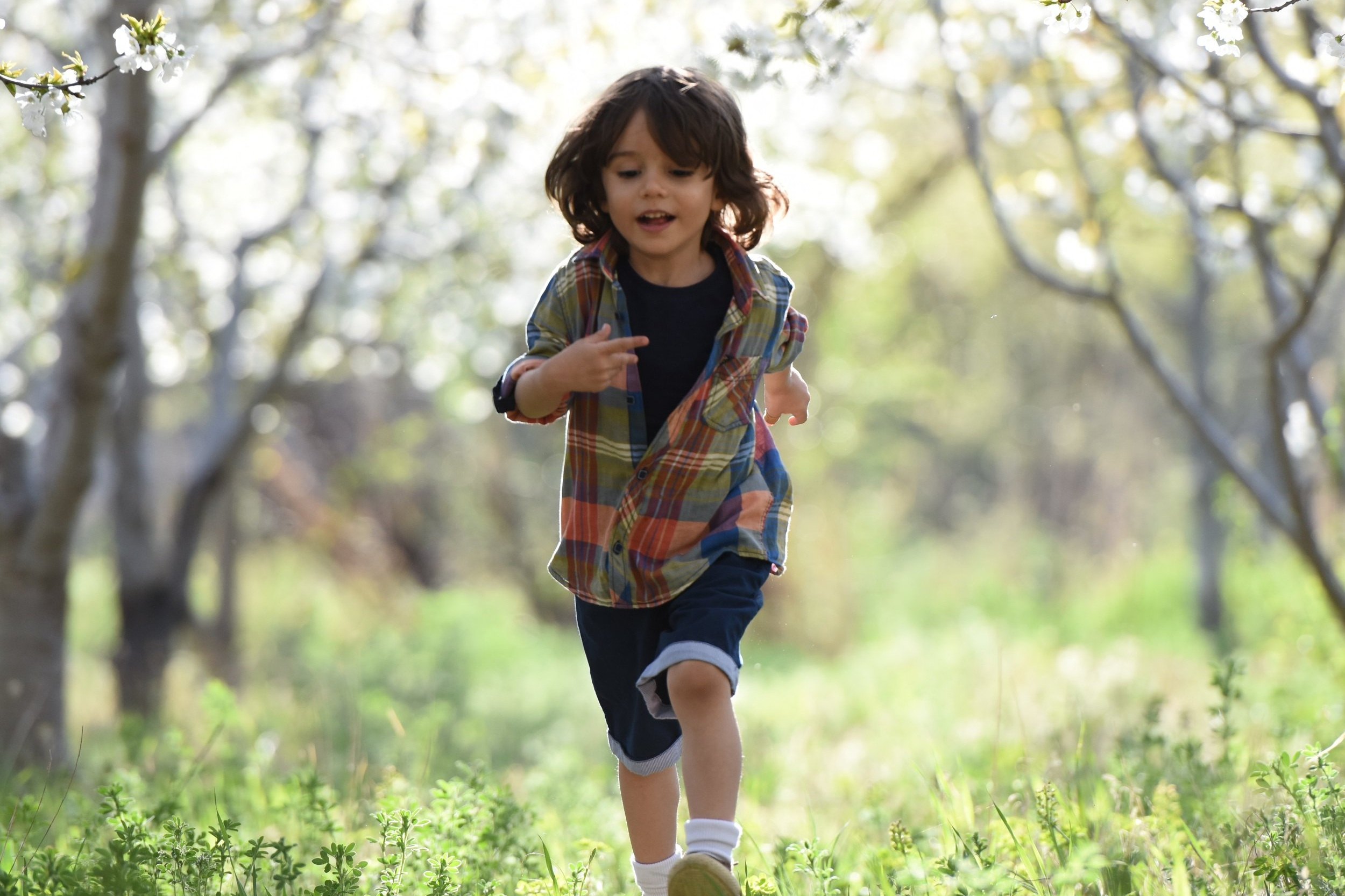 blurred-background-boy-child-1416736.jpg