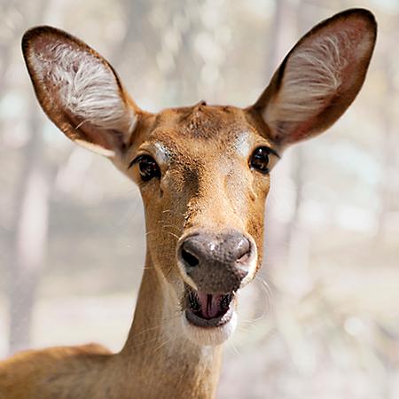 hh-animals-deer-4.png