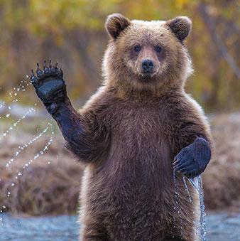 funny-bears-doing-human-things-1.jpg