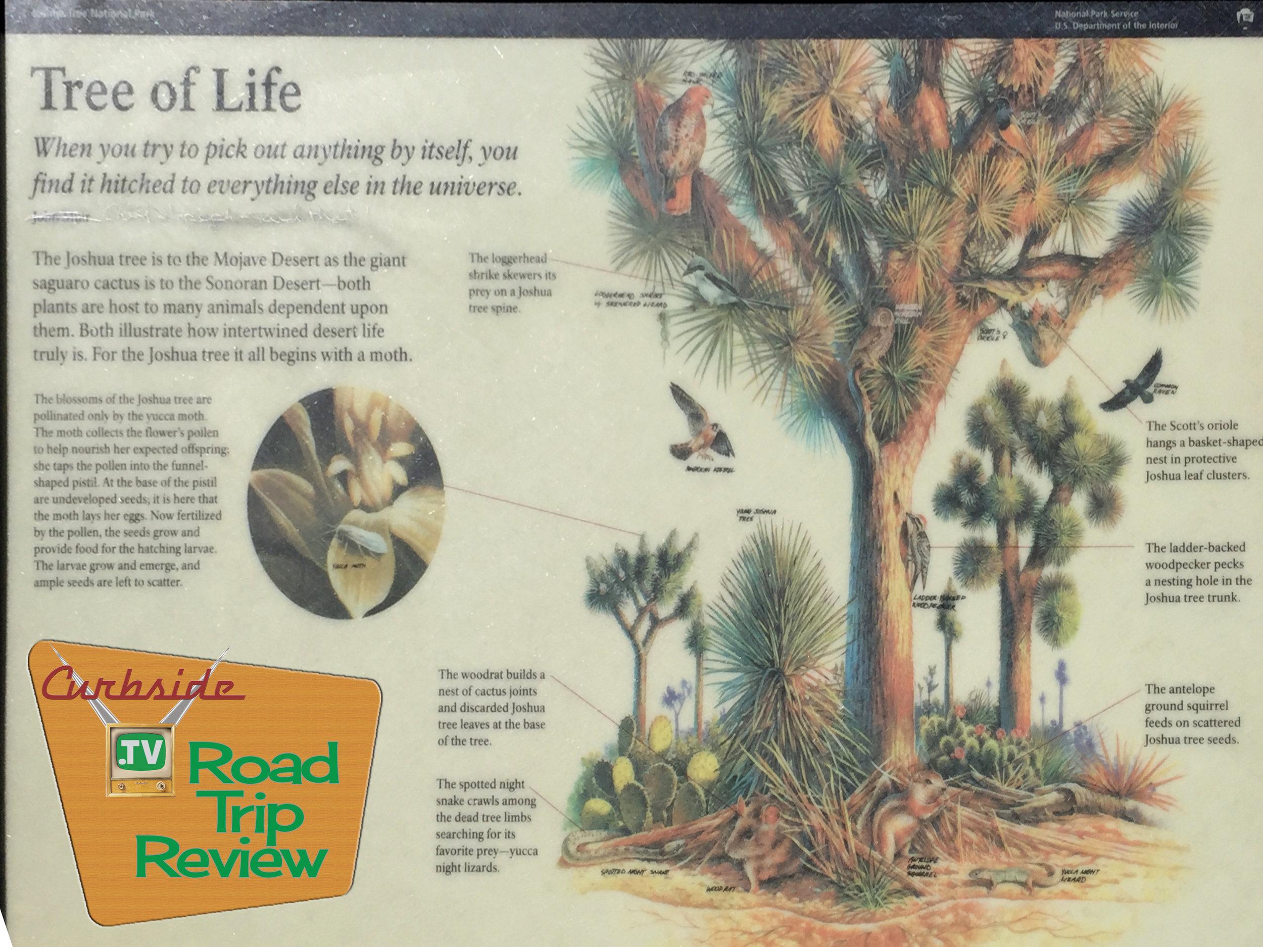 Joshua Tree National Park - 177.jpg