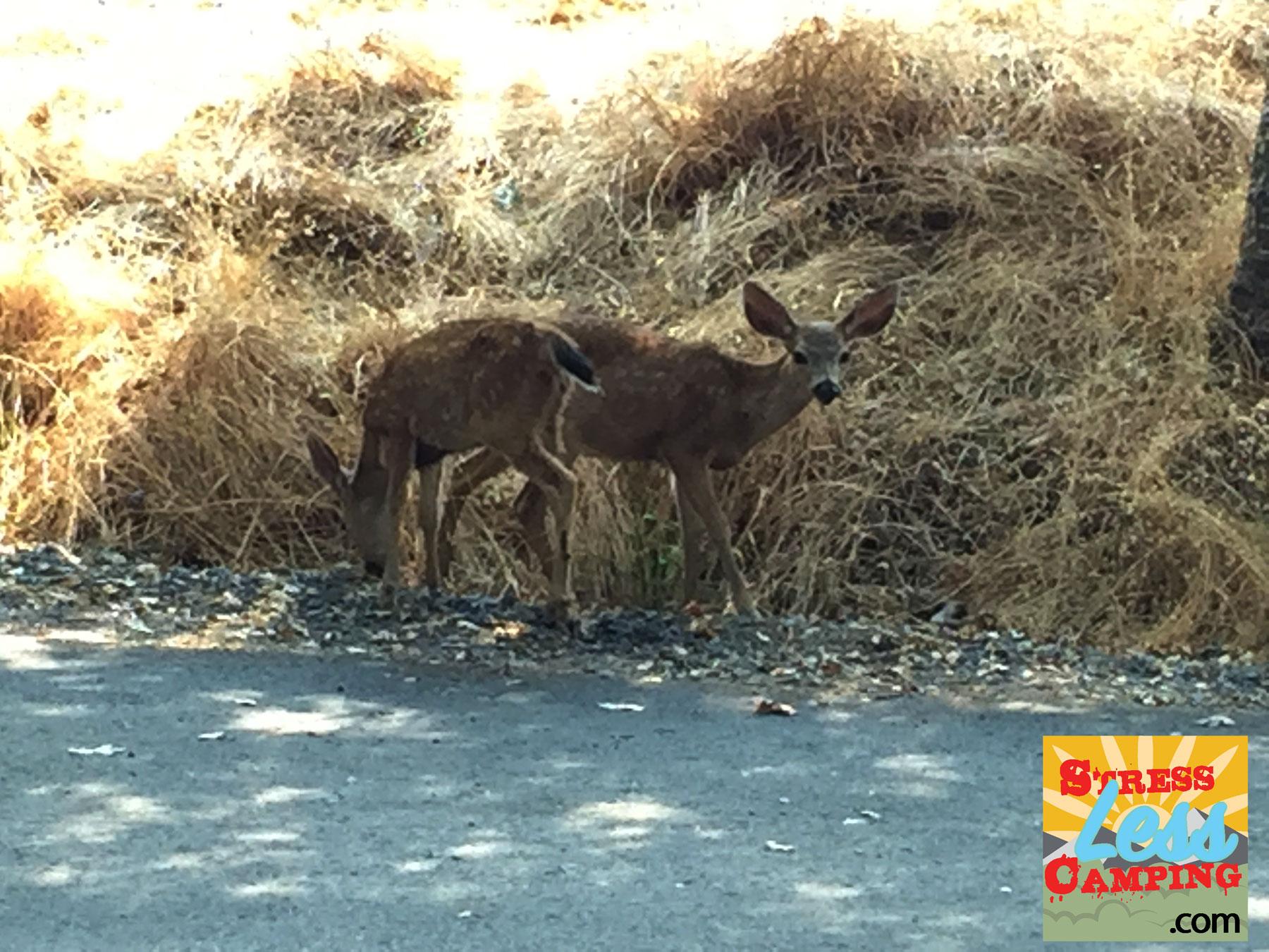 Visiting-deer.jpg