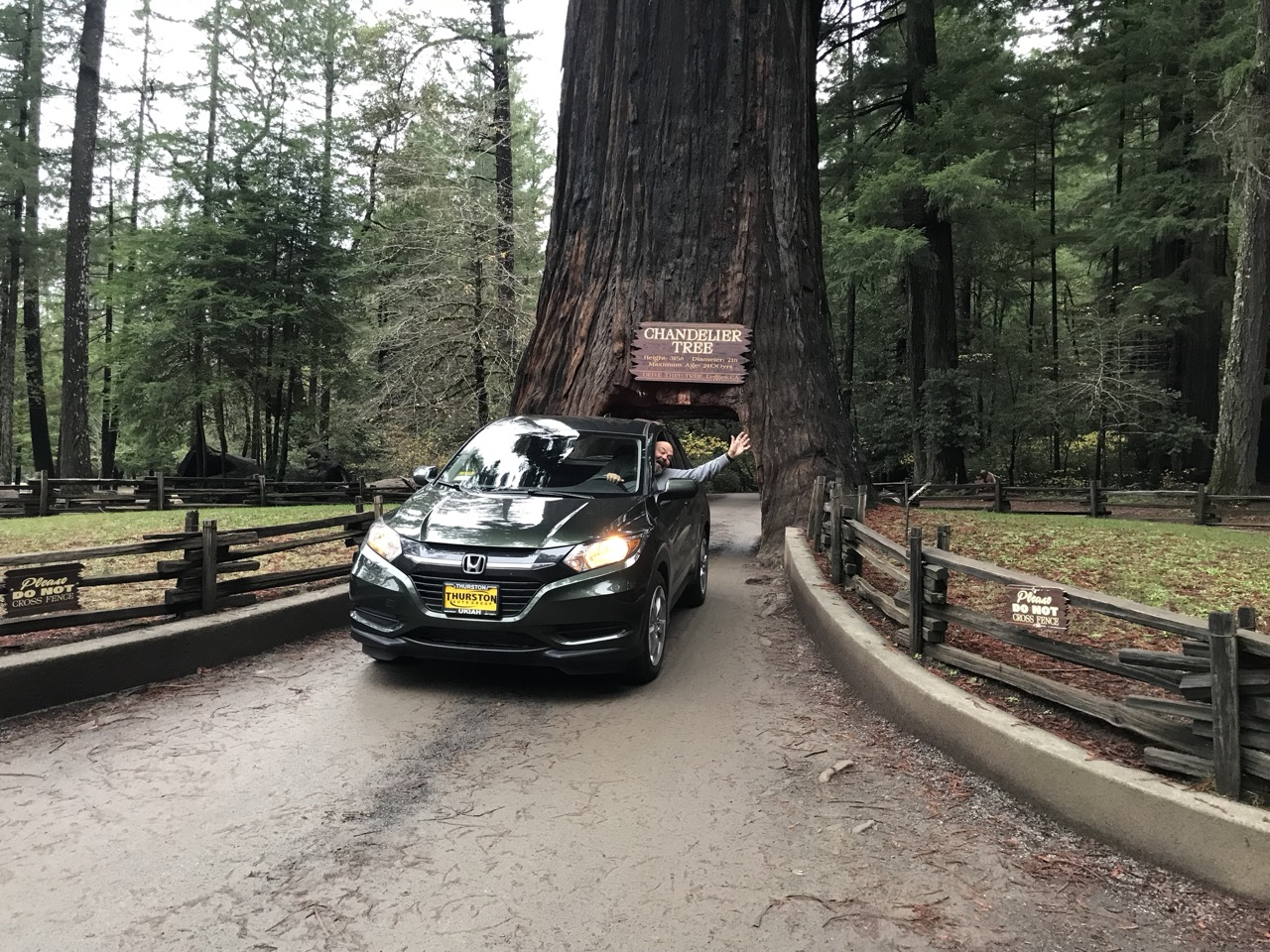 New car? Drive-through tree!