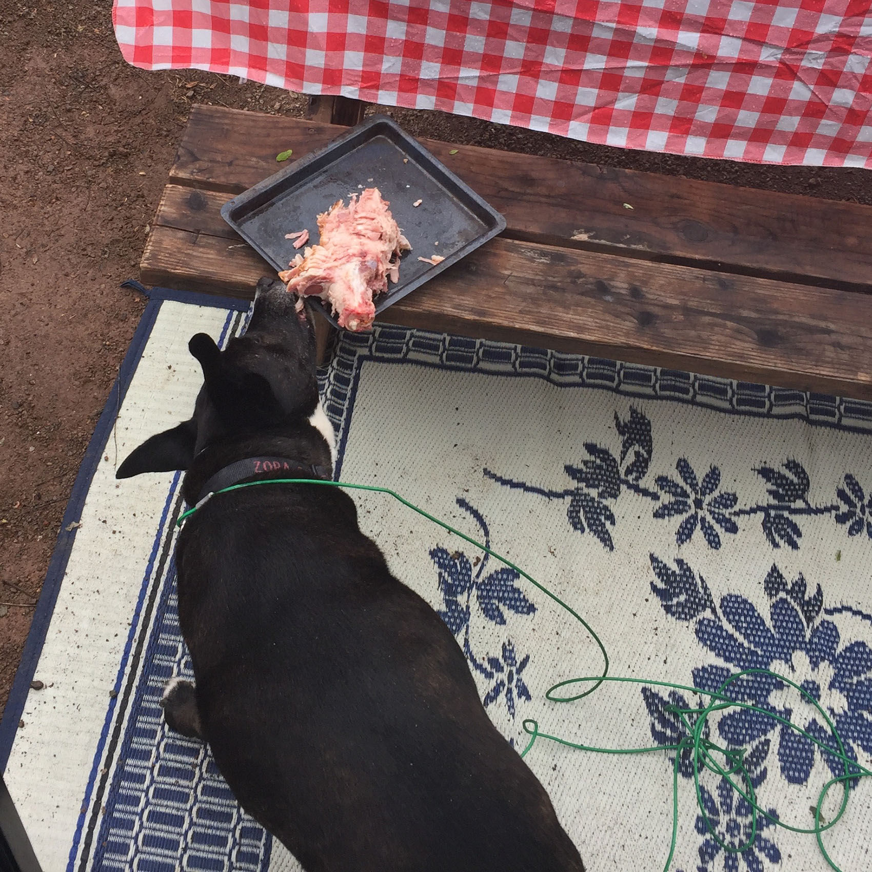 Zora happened to find a very juicy treat before whoever was barbecuing did.