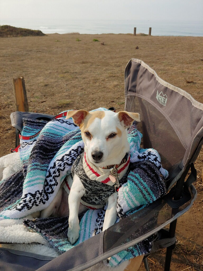 8 Tips for RVing with Pets