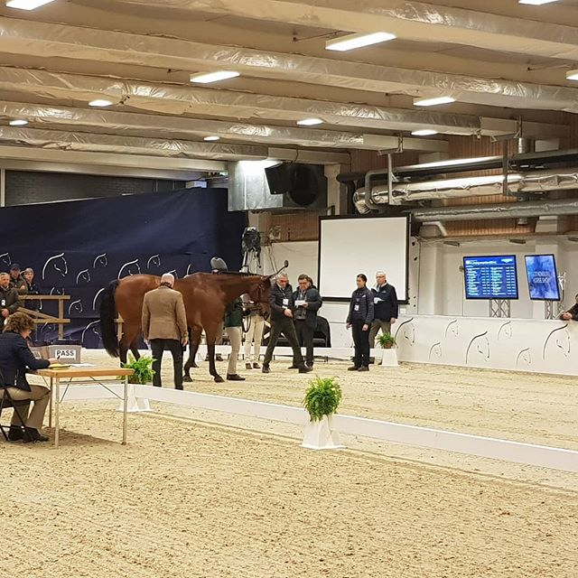 Horse Inspection #2 for horses qualified for the BIG final on Sunday.  Here we come!!!! #feiworldcupfinals #gothenburghorseshow #livingthedream #wewillwlrockit