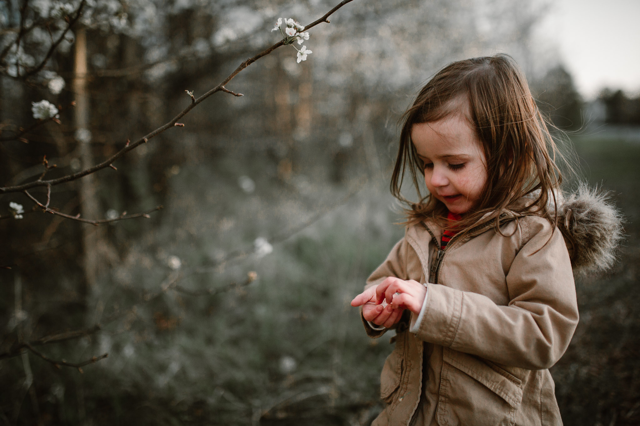 Toddler girl stands near a tree blooming with white flowers and examines one in her hand in Ashburn, Virginia