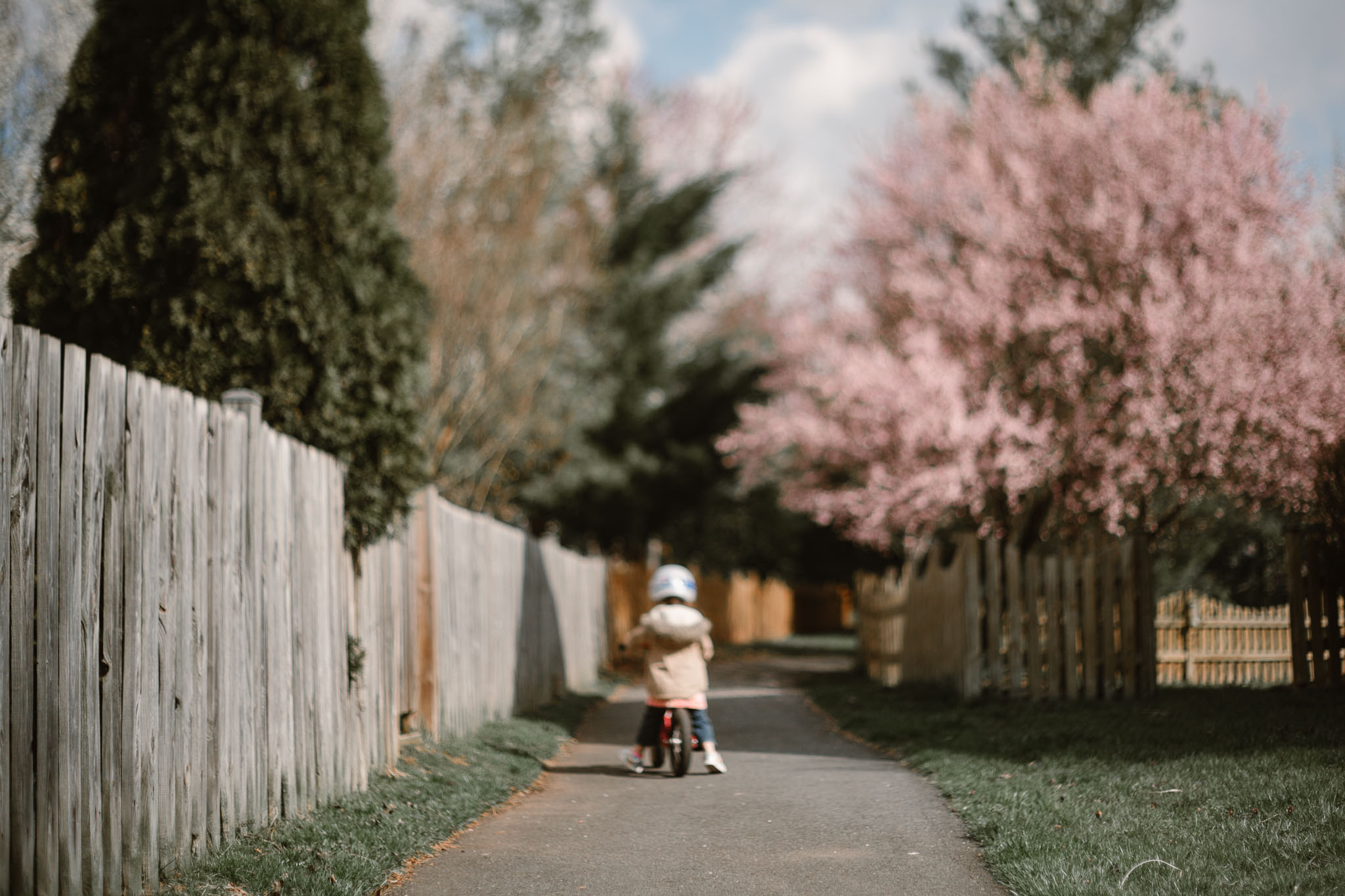 Freelensed portrait of a young girl on a bike riding down a path lined with blooming trees in Ashburn, Virginia