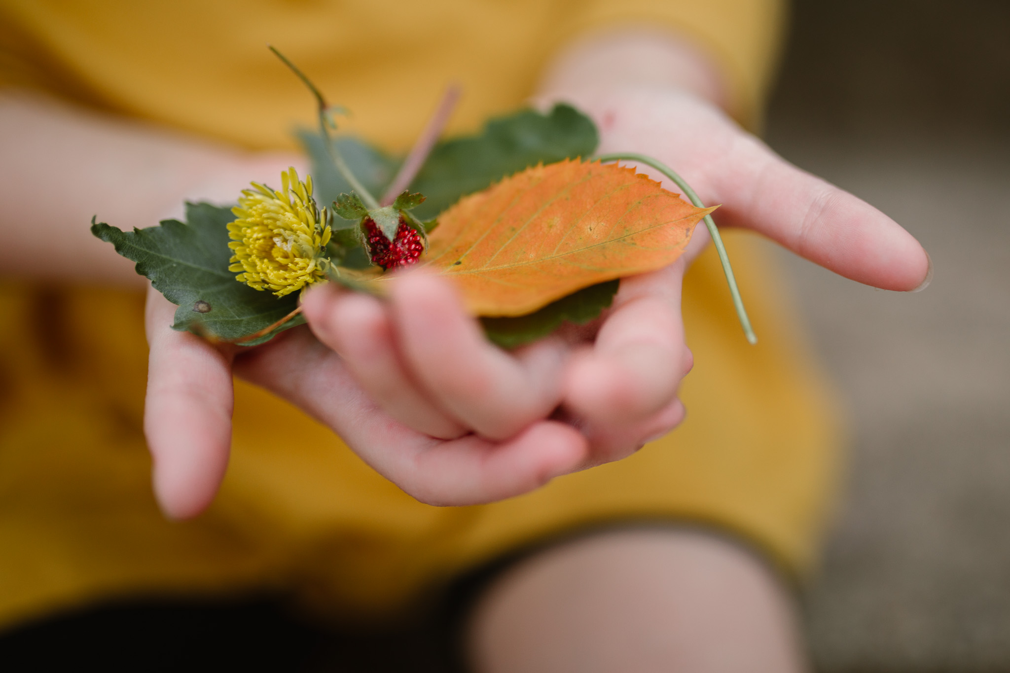 toddler in a yellow shirt holding a pile of colored leaves, flowers, and berries in her hands