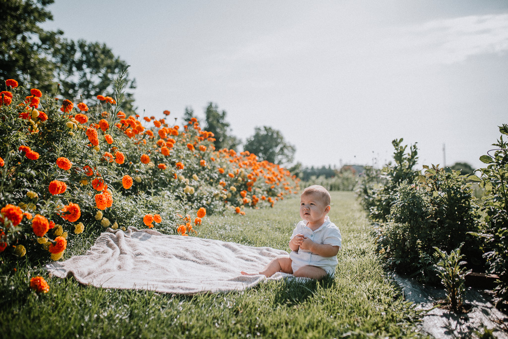 Baby boy sitting on a blanket near a row of orange marigolds  at Fields of Flowers in Purcellville, VA