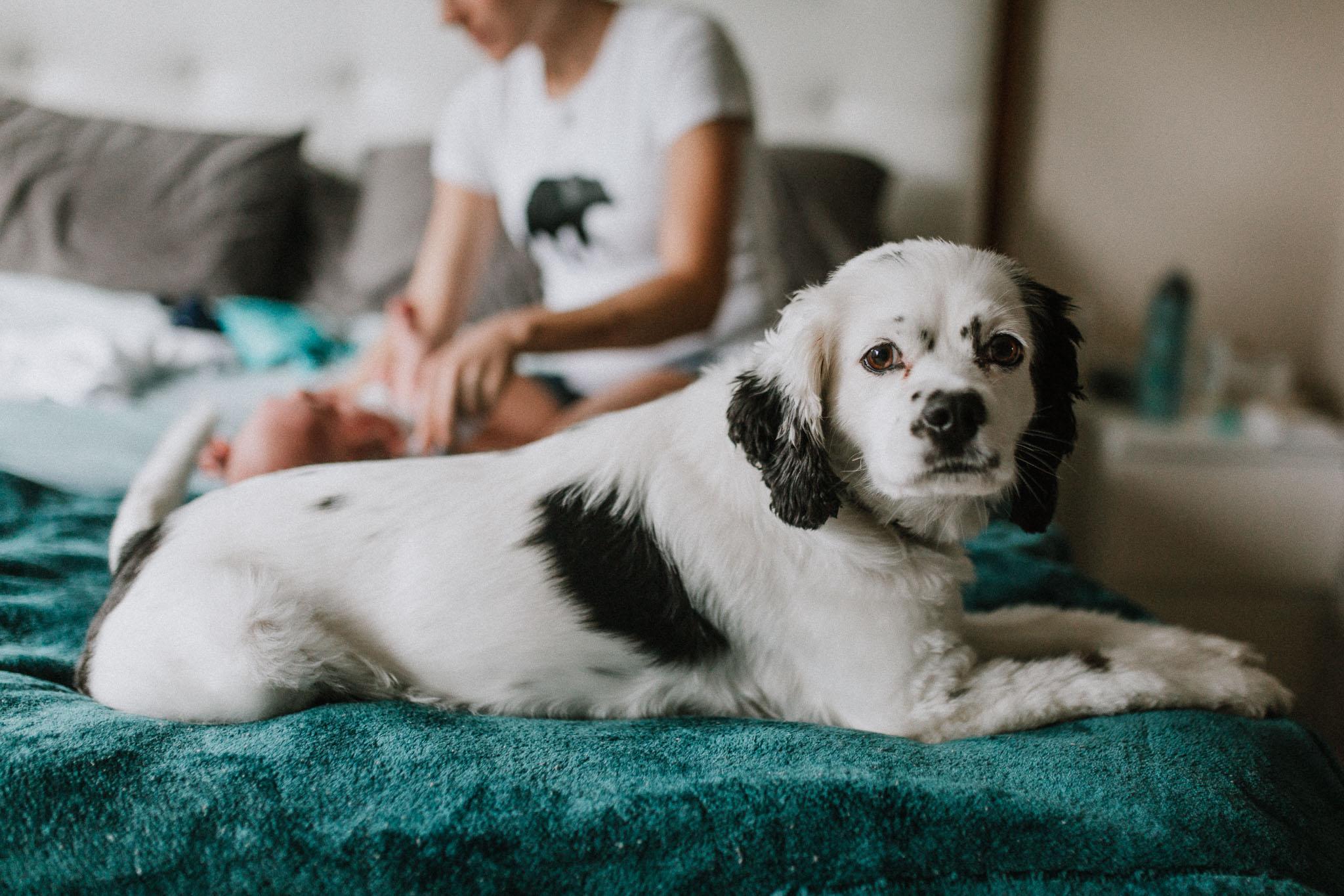 Pet Dog In Home Newborn baby boy Ashburn Virginia Loudoun Lifestyle Documentary Marti Austin Photography