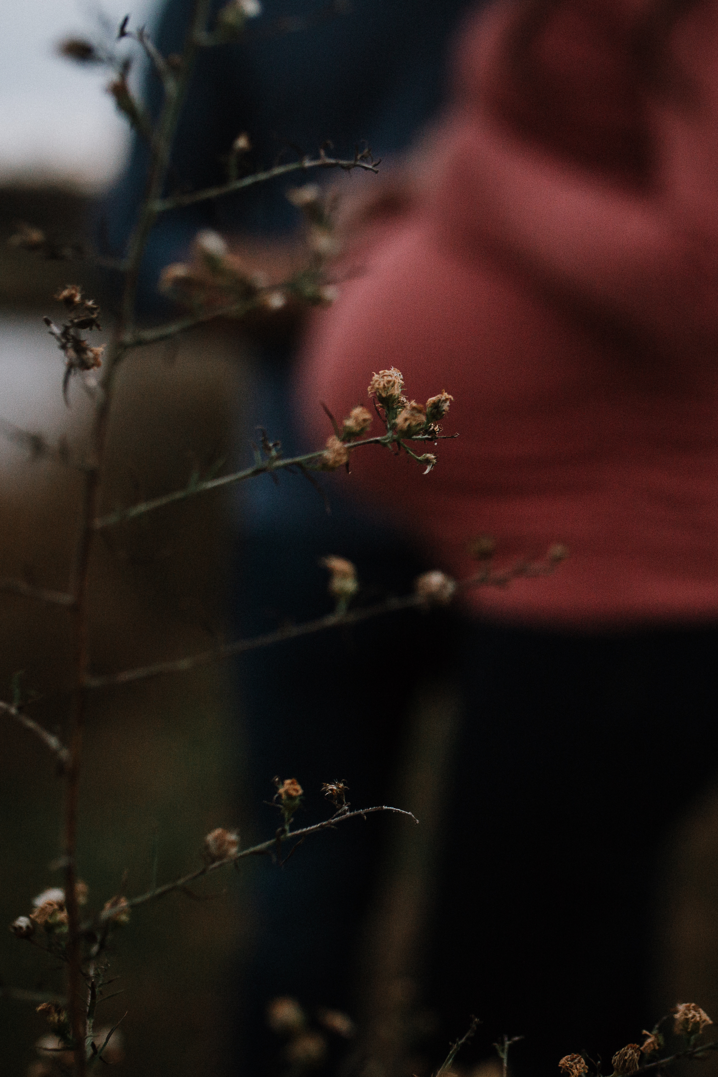details bump pregnancy grass fall autumn sunset lifestyle documentary maternity couple family Aldie Willowsford Boat House Loudoun Virginia Marti Austin Photography