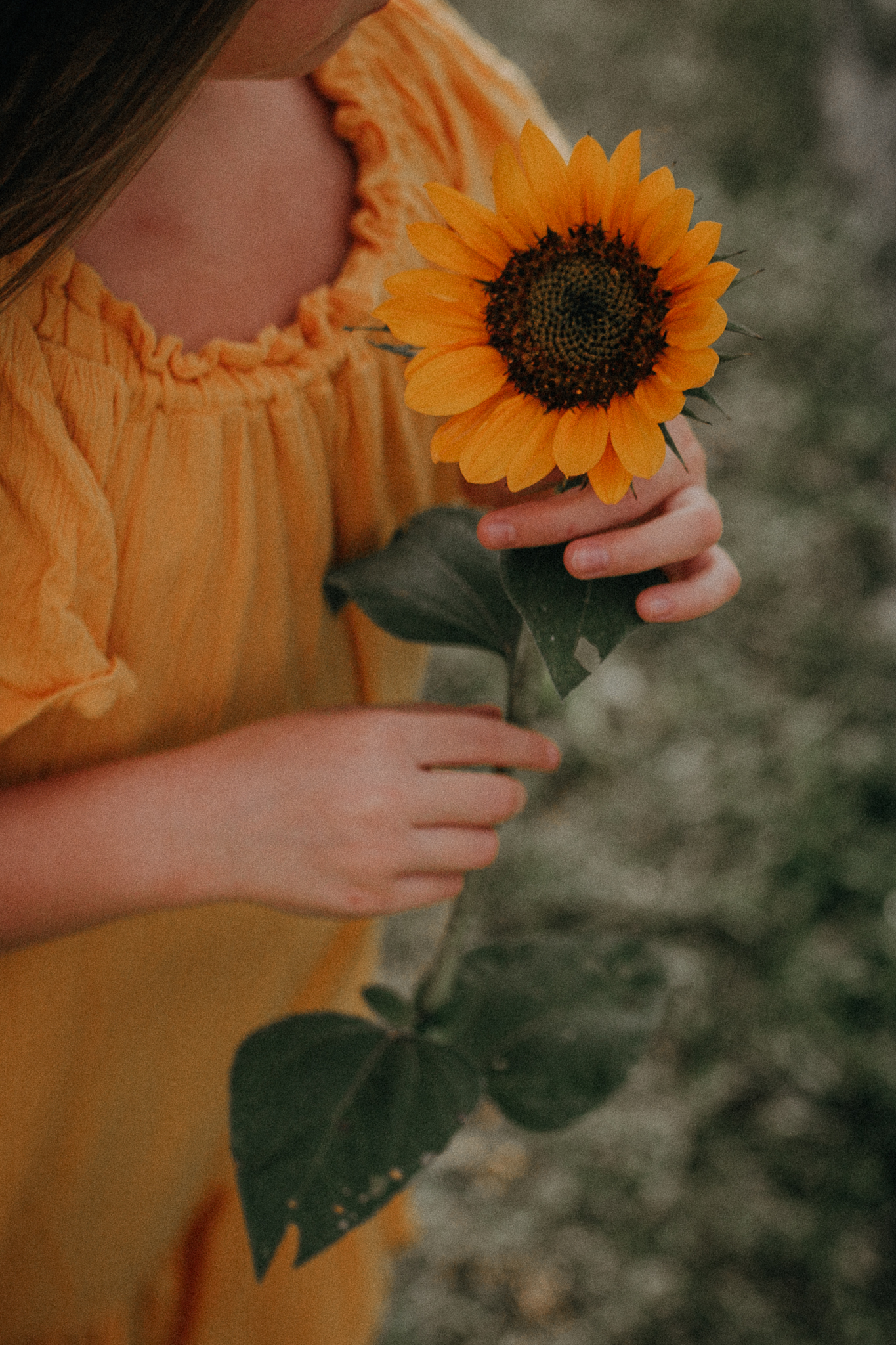 girl holding a  sunflower details summer Ashburn Loudoun Northern Virginia family lifestyle documentary childhood Marti Austin Photography