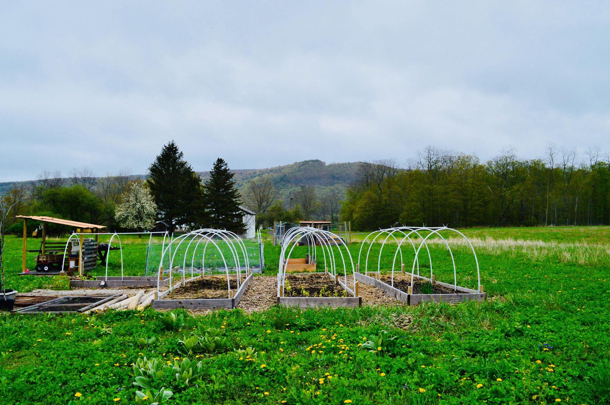 backyard garden, microfarm, farm, homestead, modern homestead, homesteading,