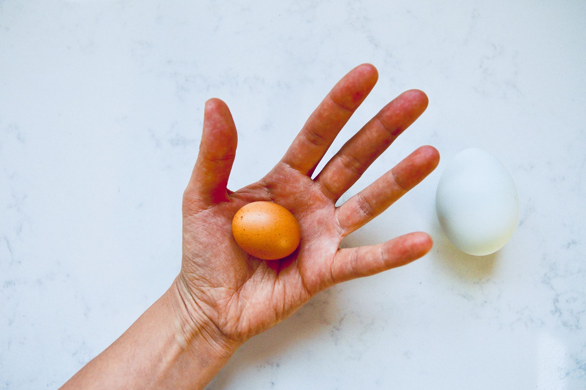 backyard chickens, fresh eggs, organic, farm fresh, homesteading, modern homestead