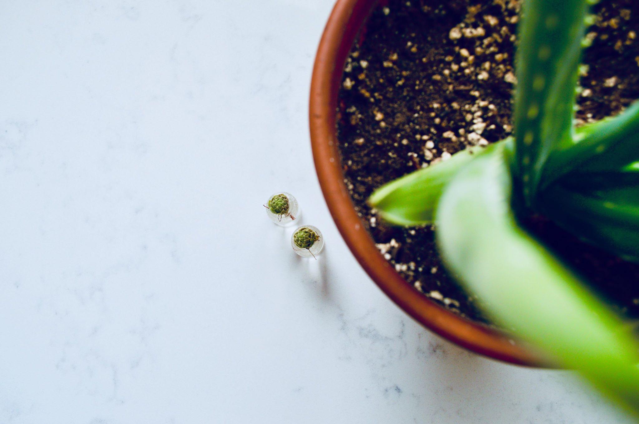 succulents, house plants, terrarium