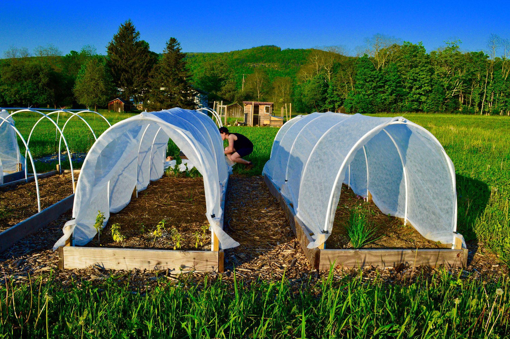 modern homestead, micro-farm, urban farm, suburban farm, row covers, raised beds, garden tunnel, deer protection, organic, farmher, homestead, feminist farming