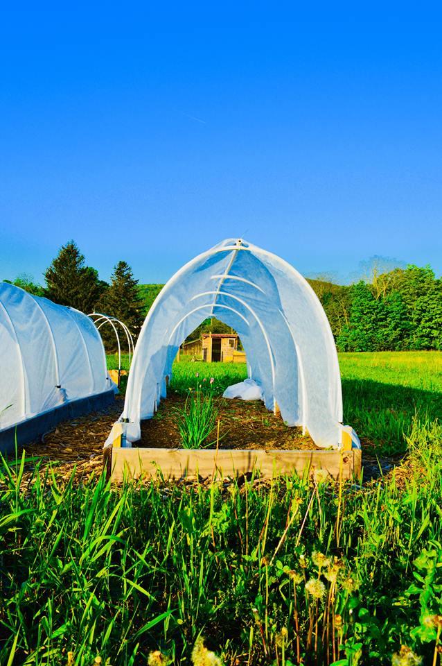 garden tunnel, raised bed, hoop house, green house, poly tunnel, pest control, deer netting, shade cloth, organic gardening, modern homestead, backyard garden, diy garden, microfarm