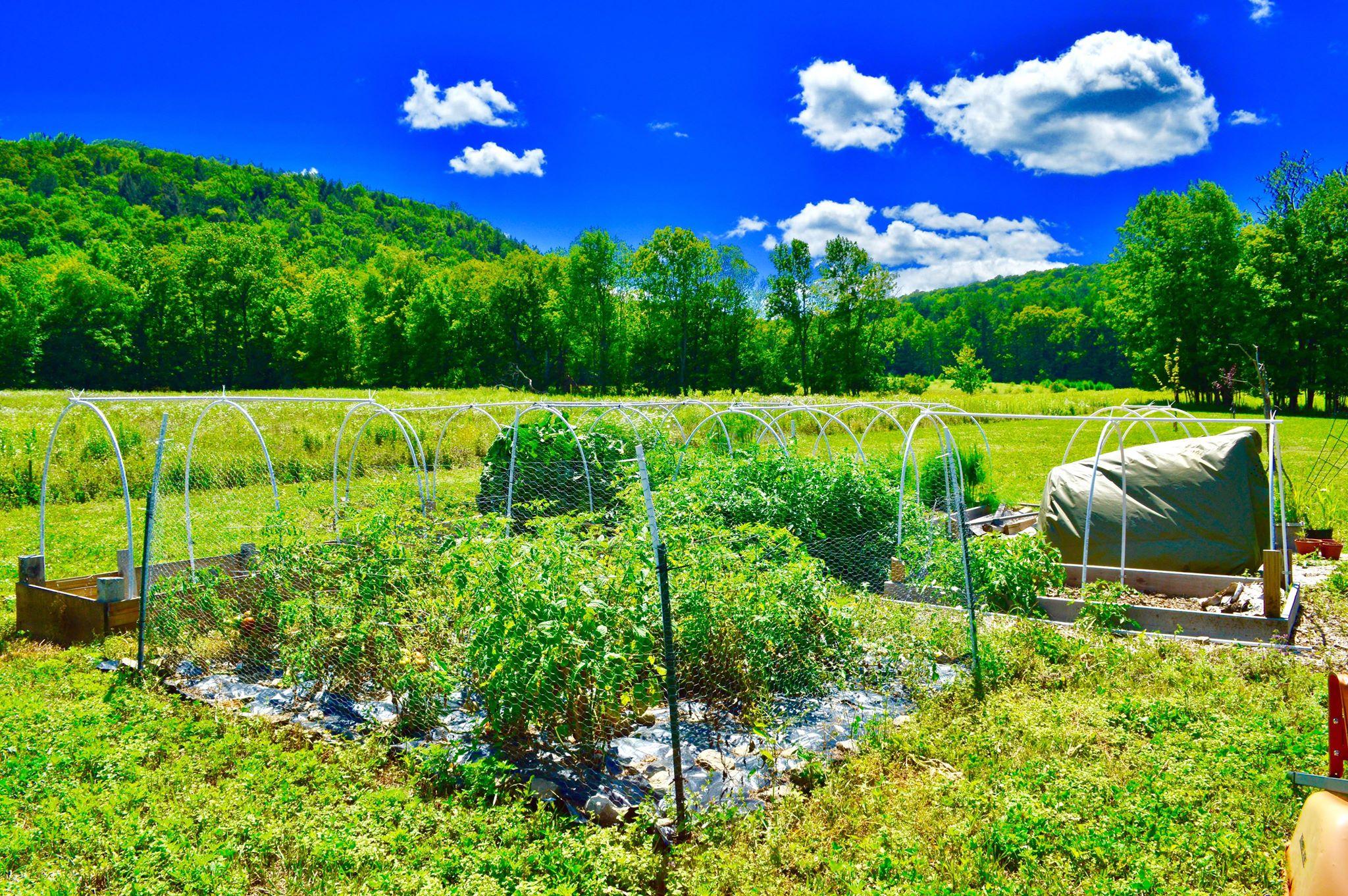 plant based life, vegan life, backyard gardening, renegade garden, square foot gardening, ithaca, modern homestead