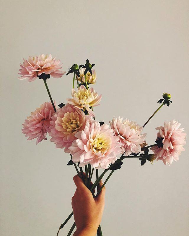 Petals on petals on petals 🌷
