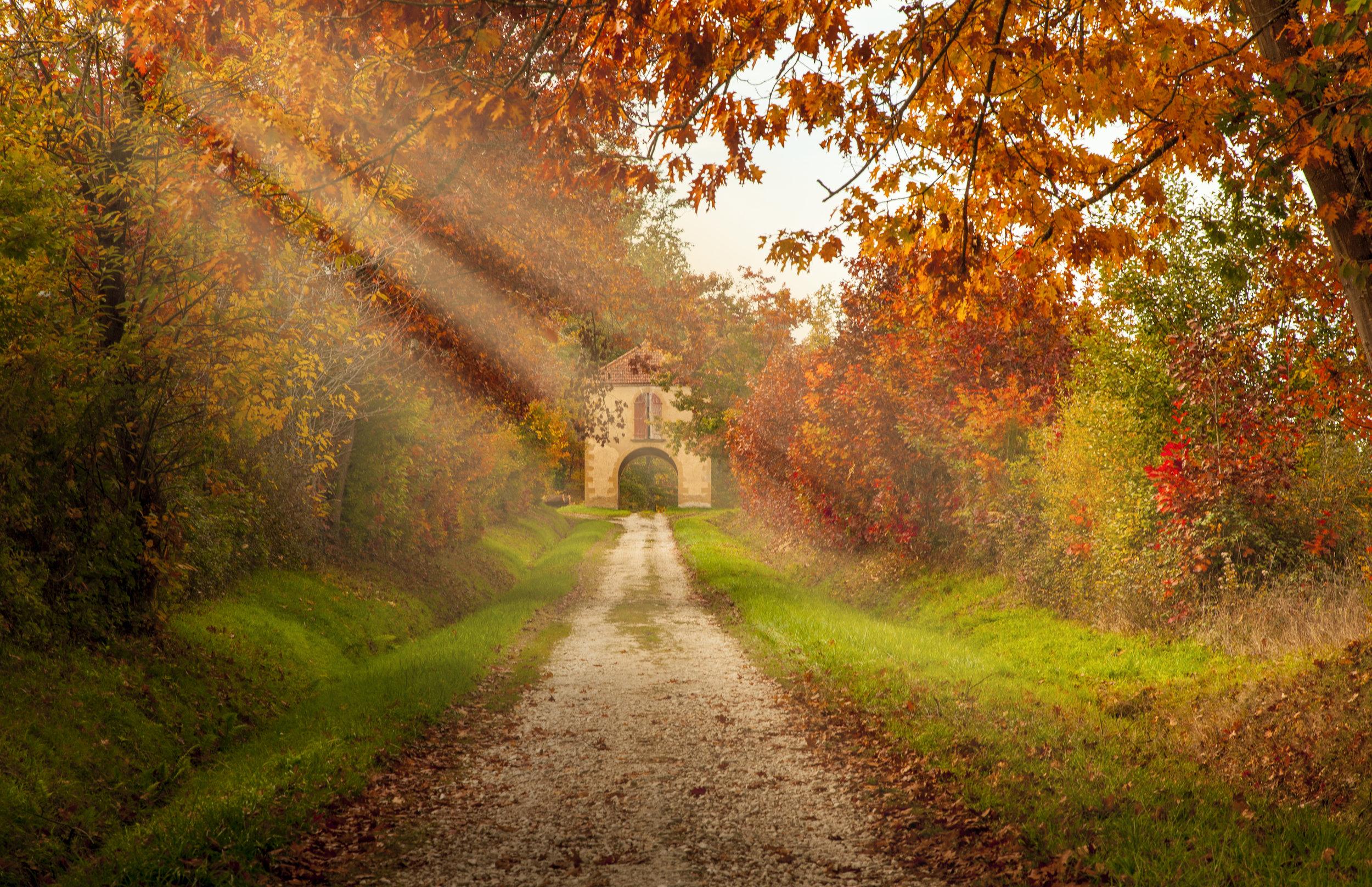 Autumn leaves in  France.jpg