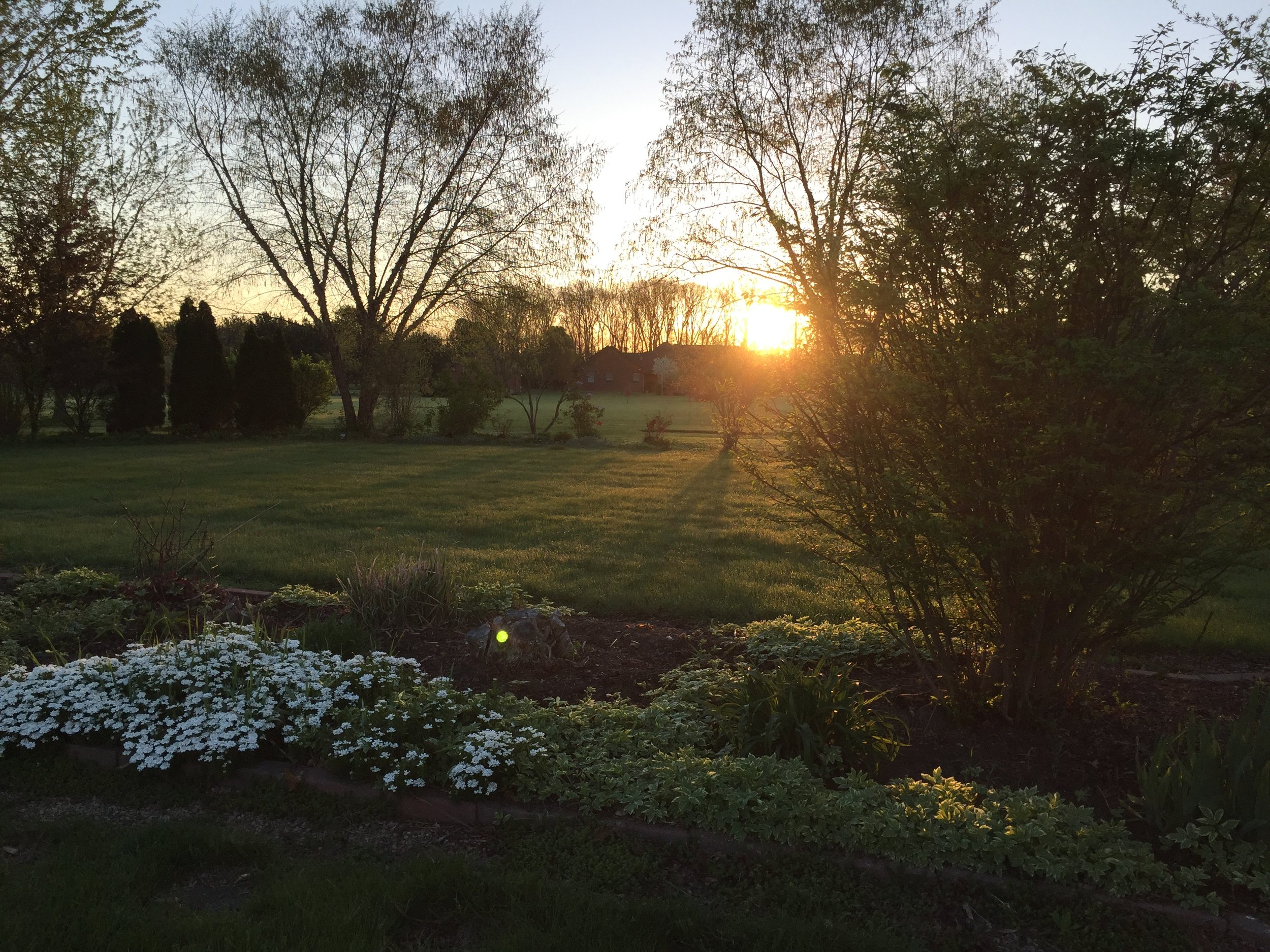 garden at sunset 2.JPG