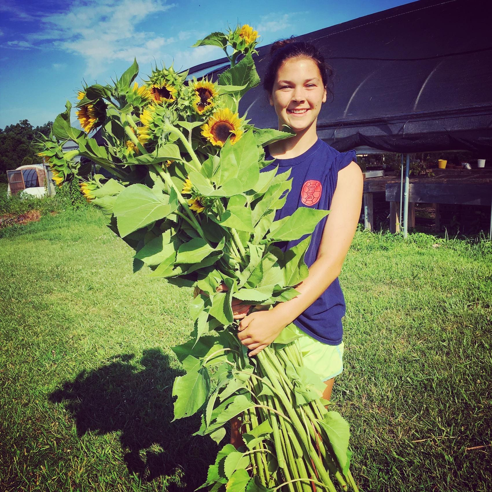 sunflowers and Taura.jpg