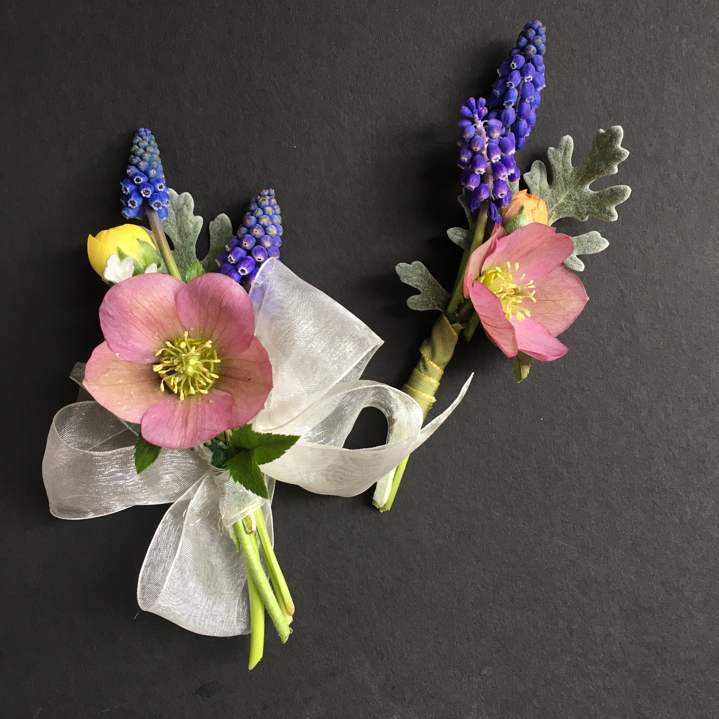 early spring boutonnière and corsage with hellebore, grape hyacinthe and ranunculus buds