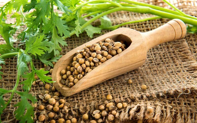 Koriander frø - Stimulerer frigivelsen af insulin, sænker blodsukkeret og kan sænke for højt LDL – det dårlige kolesterol. Det kan også bruges til behandling af betændelse i huden, diarré, mavesår og anæmi.
