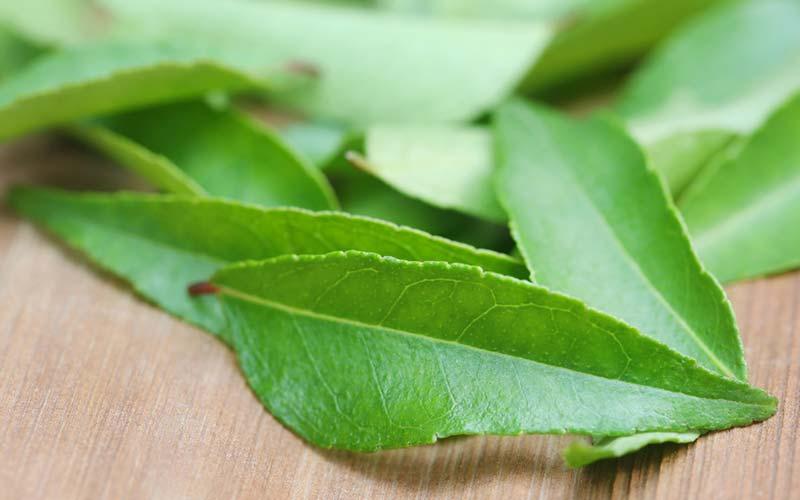 Karry blade - Såvel som lækre, karry blade kan forbedre mave og tyndtarm funktionalitet. De kan også reducere dårligt kolesterol og nære hårrødder.