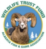 wtf-logo.jpg