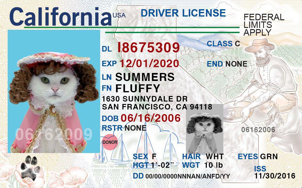 amory_fake ca license.jpg