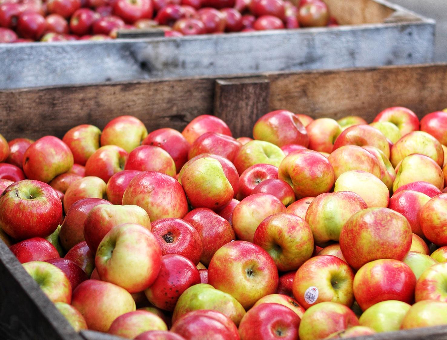 slabtown cider co apples marketplace the market.jpg