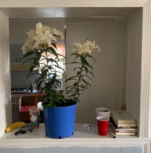 Home + Banana + New Friend