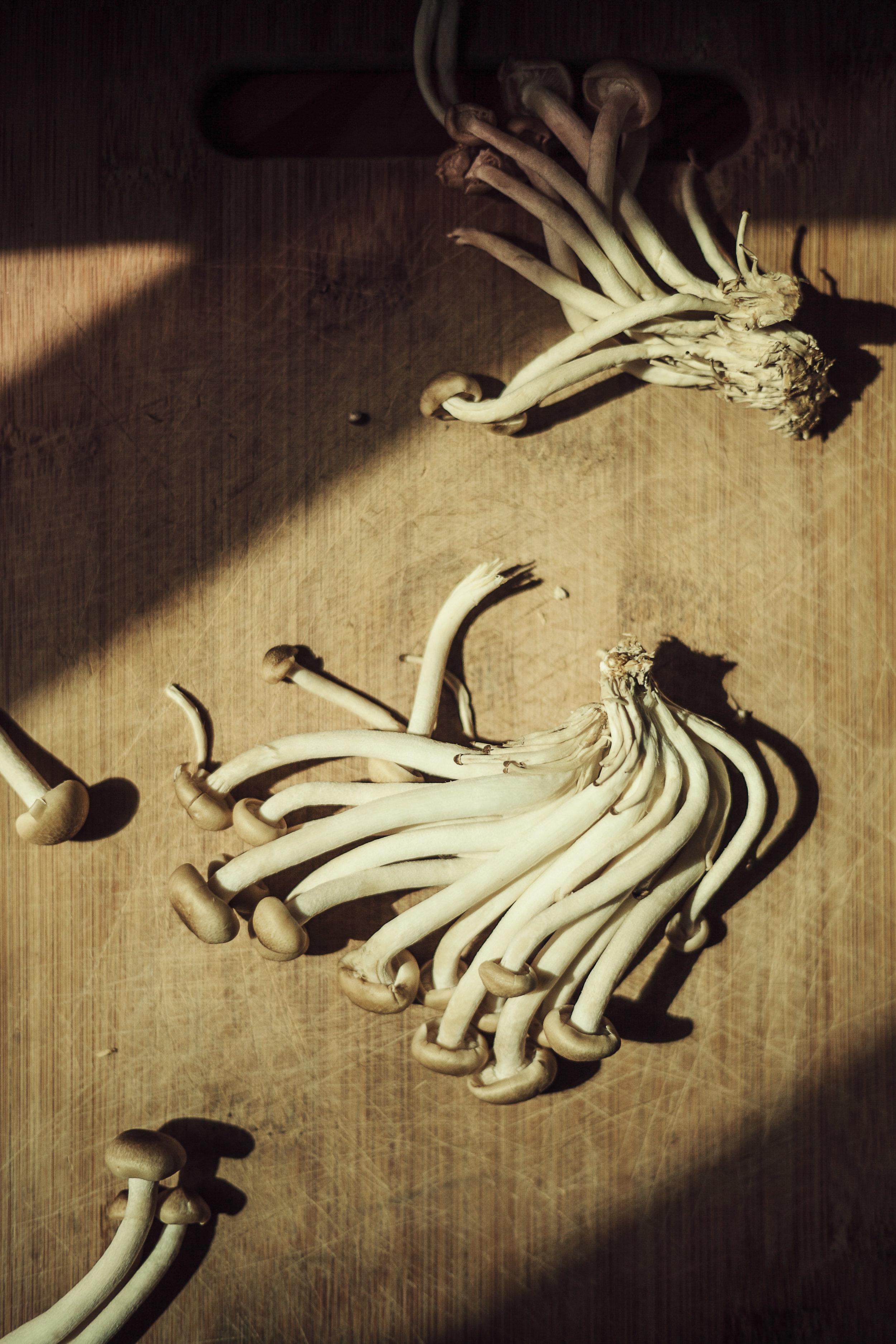 Mushroom164.jpg