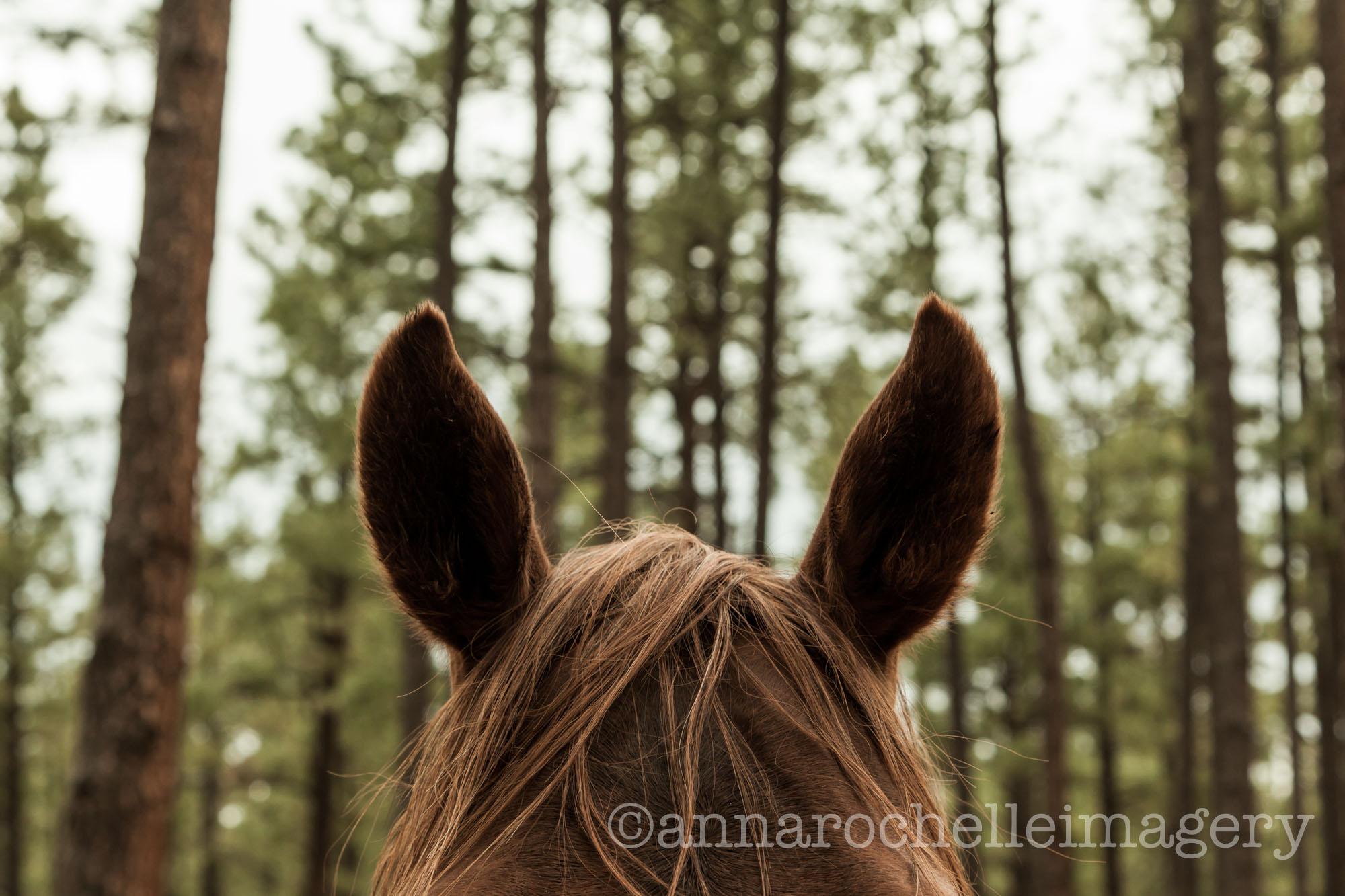 horses-greer-anna-rochelle-imagery-5.jpg
