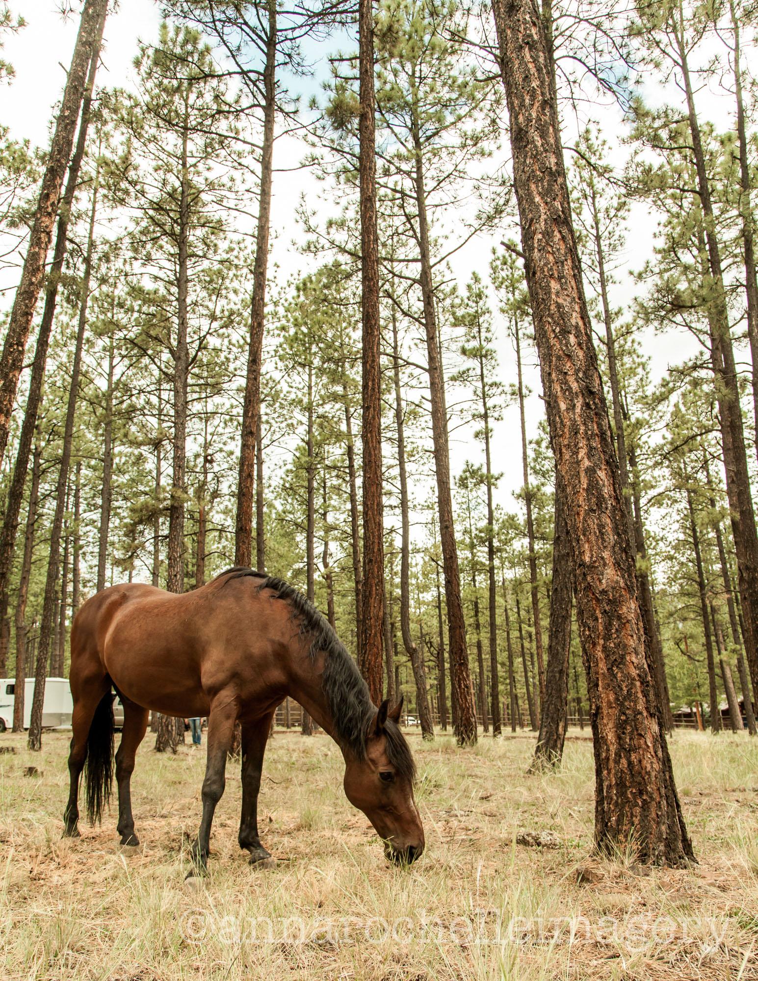 horses-greer-anna-rochelle-imagery-4.jpg