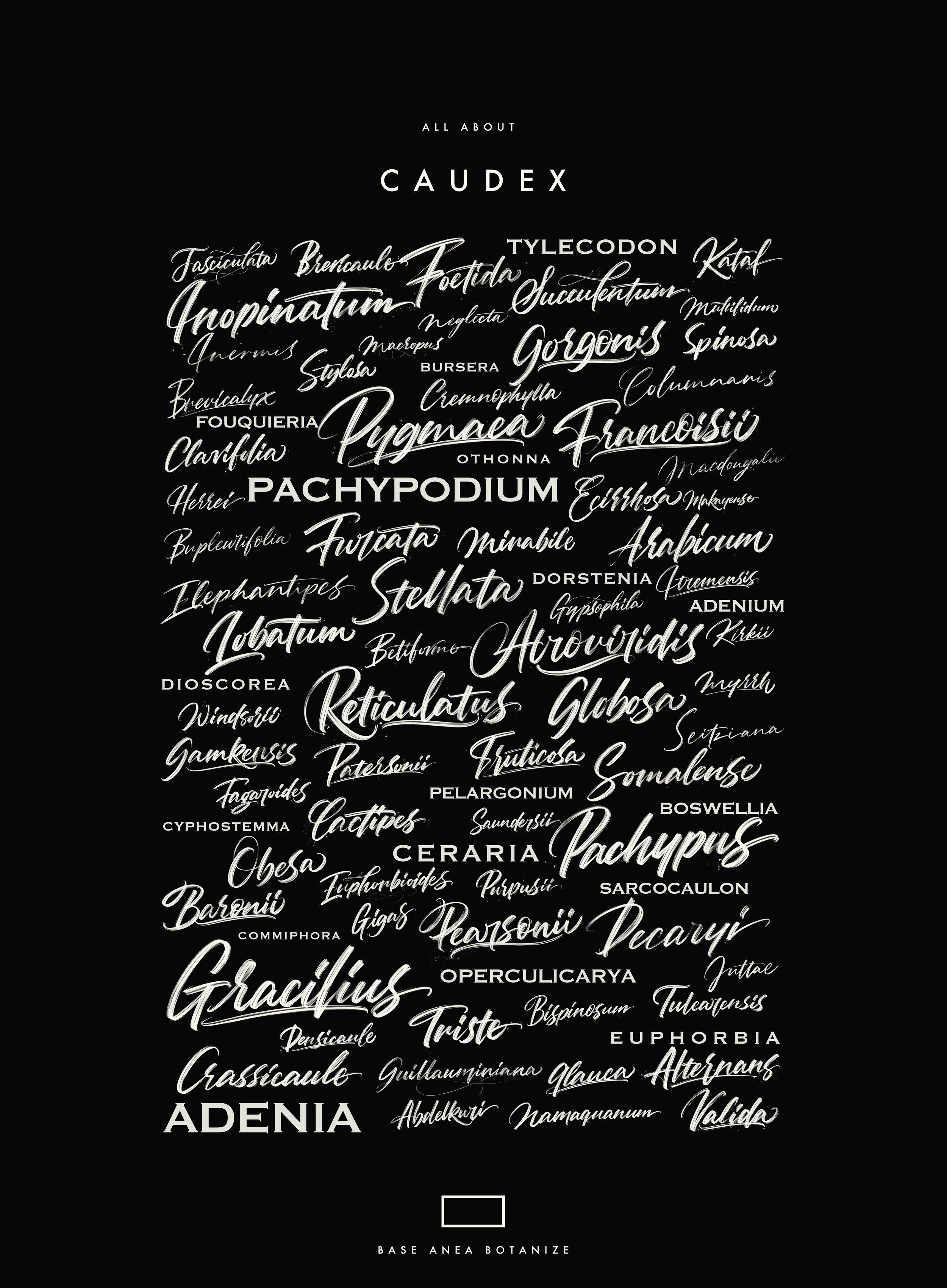 CAUDEX.JPG