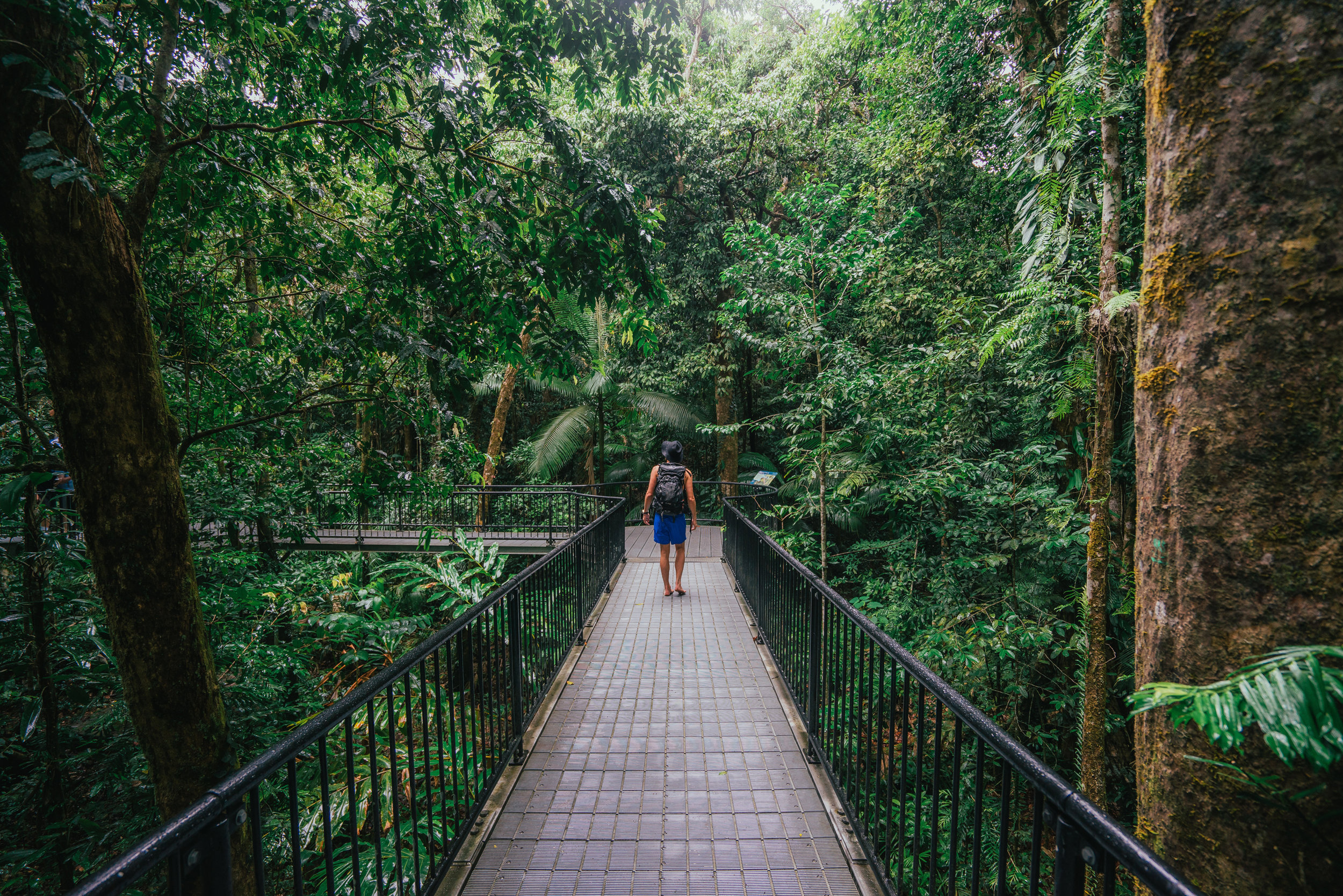 Elevated walkways Mossman Gorge (1).jpg