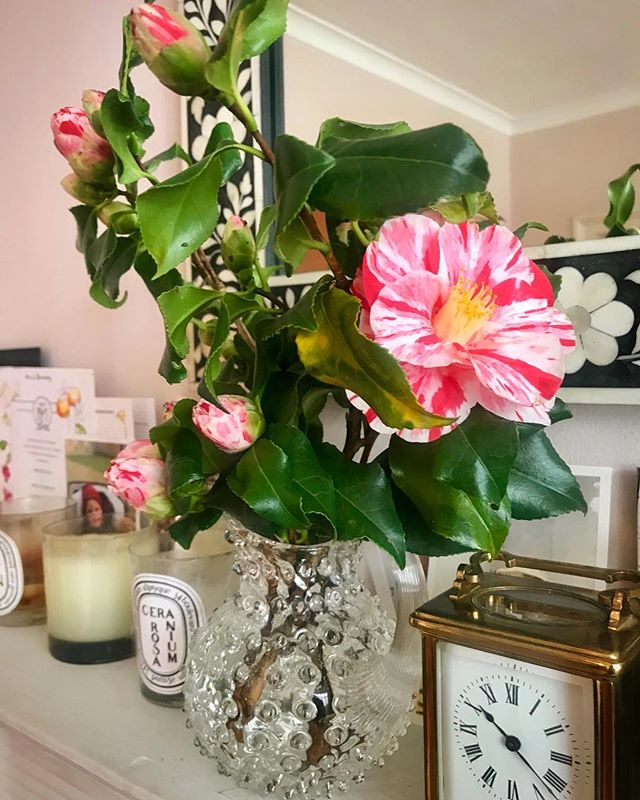 My very favourite camellias from my parents' garden - my dad calls them the raspberry ripple variety💞💞💞💞💞SORRY flowers again!!!!!!! 🤪 can't help myself maybe I have a nature appreciation disease ? Or is it just called middle age?